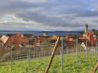 Weinberg mit Blick auf Meersburg