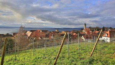 Weinberg mit Blick auf Stadt Meersburg und Bodensee; Foto: Staatliche Schlösser und Gärten Baden-Württemberg, Markus Schwerer