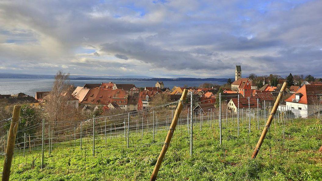 Weinberg mit Blick auf Stadt Meersburg und Bodensee